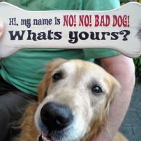 NoNoBad Dog