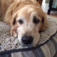 Resting Dog